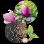 Magnolie & Weißer Radieschensamen